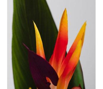 Umelý kvet PARROTBEAK